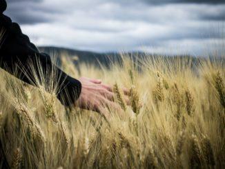 Flächenverbrauch in Niedersachsen reduziert, Ökolandbau ausgebaut