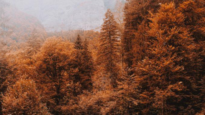 Ökosysteme: Was sagen Schwellenwerte wirklich aus?