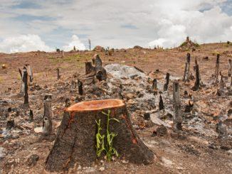 NABU: Energetische Nutzung von Holz darf nicht weiter gefördert werden