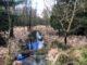 Wiedervernässung von Mooren in der Südheide soll CO2-Ausstoß senken