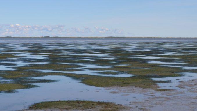 Kinderstube vieler Nordseefische in Not